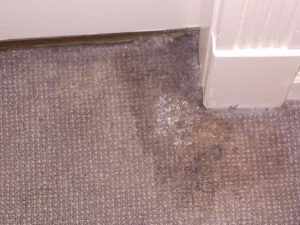 carpet and mould